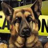Detective Max 2