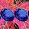 Hidden Gemstones Autumn Leaves
