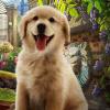 Pet Foster
