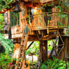 Silence of the Tree House
